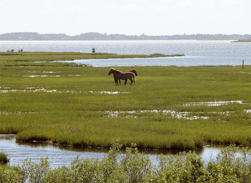 chincoteague girls Many girls (and boys) have learned to love horses and ponies by reading this captivating story if you haven't read it yet, you'll want to put it at the top of your list comments for misty of chincoteague.