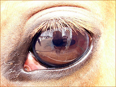 Life in the Eyes of a Horse