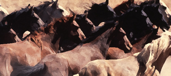 Wild Horses, Our Hearts