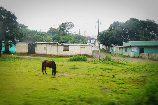 Horse Grazing in Guatemala