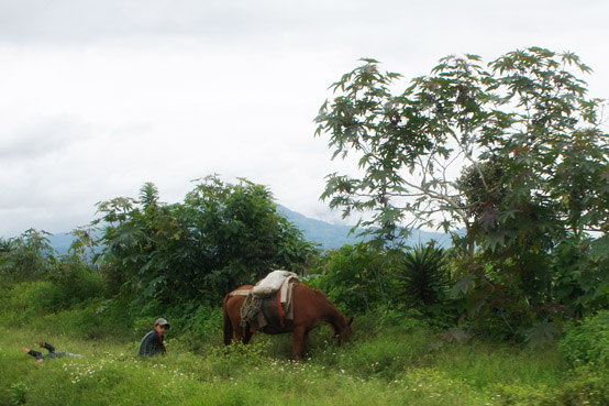 Horse Grazing While Children Play in Guatemala