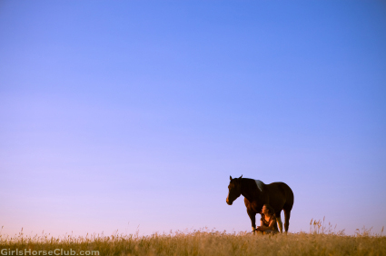 Chasing the Dream of Horses